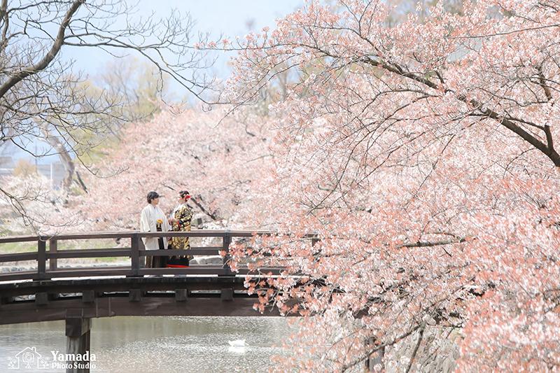 松本城桜和装